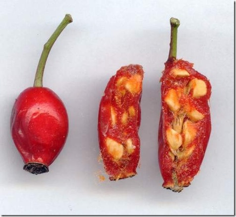 fruit_aubépine